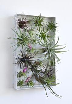 Airplantman's Indoor Vertical Garden Frames