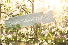 Ok...so what ever your venue if you love love love Anne of Green Gables make signs for the site that inspire you!!    Anne of Green Gables Wedding Inspiration.