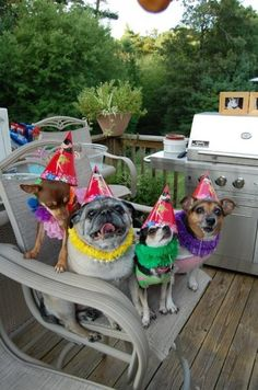 Somebody you know having a birthday? Give them a Gift Certificate from Magic's Pet Salon! Gift Certificates are good towards grooming services (for small dogs up to 30 lbs) and retail items!