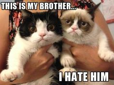 Grumpy cat brother