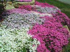 Diy landscaping Ideas For Backyard Landscaping Around Deck, Rustic Landscaping, Landscaping Ideas, Patio Ideas, Garden Ideas, Love Garden, Lawn And Garden, Corner Flower Bed, Flowers