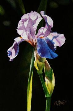 Backlit Iris, painting by artist Jacqueline Gnott