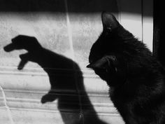 #Cat and #shadow