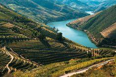Os vinhedos que ornam o sinuoso Douro, em Portugal