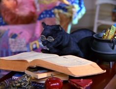Salem Saberhagen - Google Search