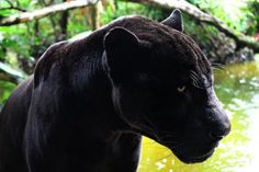 20 Animals That Look Like They've Turned to the Dark Side | CutesyPooh
