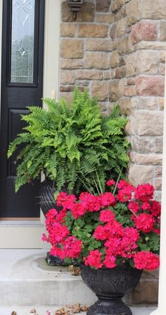 20 planters from my neighborhood! Over 20 flower planter ideas from my neighborhood!Over 20 flower planter ideas from my neighborhood! Geranium Planters, Fern Planters, Front Door Planters, Potted Geraniums, Red Geraniums, Flower Planters, Flower Containers, Succulent Containers, Flower Pots
