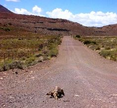 The Karoo back roads are full of surprises    Trapvoet Pass