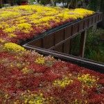 Colourful transformation for a flat roof Sedum Roof, Flat Roof, Service Design, 3 D, Architecture Design, Garden Ideas, How To Draw Hands, Board, Architecture Layout