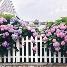 Creative Tips: Wooden Fence Minecraft 8 Wooden Fence Posts.Fence Ivy Ideas Modern Fence Technologies Inc.Backyard Fence Ideas On A Budget. Hydrangea Garden, Hydrangeas, Hydrangea Flower, Hydrangea Landscaping, Peonies Garden, Succulents Garden, White Picket Fence, Picket Fences, White Fence