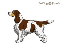 Furry Paws // WCT Kip's Yula All the Fans [22HH 1.442] 12.3 *BoB*'s Kennel