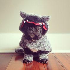 San Francisco based photographerSonya Yu and his French Bulldog Trotter