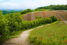 Footpath to hills of flower fields in Kamifurano, Hokkaidō - Japan, June 2017. Set against the backdrop of Mt. Tokachi, an active volcano in Daisetsuzan National Park, those flower strips on the hill will be in full bloom in late July to August.