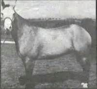Chickasaw Horse ; An early descendant of Spanish horses brought to the Americas…