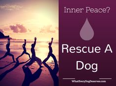 Want inner peace? That's easy. Rescue a dog.   Click on the image for more inspiration.   #dogs #adoption