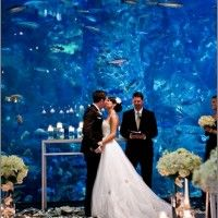 Long island aquarium wedding