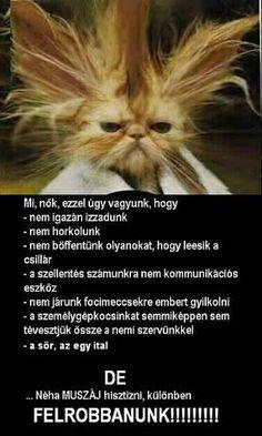 Appaloosa, Bff, Memes, Cats, Funny, Animals, Smile, Facebook, Gatos