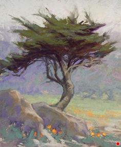 17 Mile Cypress by Kim Lordier Pastel ~ 11 x 9