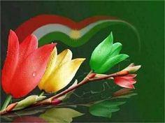 Kurdistan color's