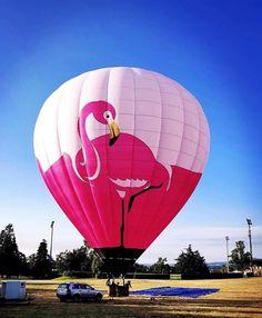 Flamingo Craft, Flamingo Decor, Flamingo Party, Pink Flamingos, Flamingo Outfit, Air Balloon Rides, Hot Air Balloon, Big Balloons, Pink Bird