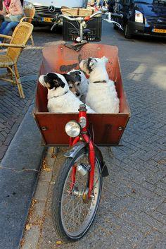 Best bike basket ever.  Amsterdam, Netherlands