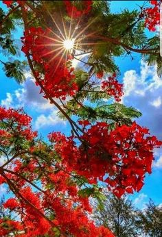 Flowers and nature and all the elegance Beautiful World, Beautiful Gardens, Beautiful Images, Beautiful Flowers, Landscape Photography, Nature Photography, Pretty Wallpapers, Flowering Trees, Flowers Nature