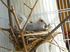 Why is the male sitting in the nest