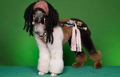 Bizarre Dog haircuts - Pirates of the Caribbean hero Jack Sparrow