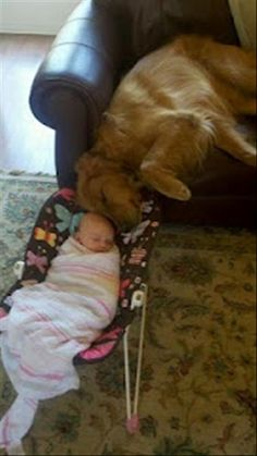 baby-and-dog.jpg 620×1,102 pixels