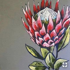 Protea Art, Protea Flower, Line Art Flowers, Flower Art, Watercolor Flowers, Painting Flowers, Australian Native Flowers, Africa Art, King Art