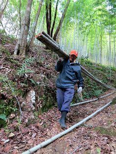 竹虎四代目がゆく!「虎竹の旅の始まり」 竹の山出し 山だし 竹林 虎竹 虎斑竹 竹職人 伐採 bamboo tigerbamboo bamboocraftsman