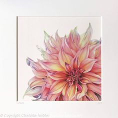 Labyrinth Dahlia Giclee Print - Giclee print of an original watercolour painting by Charlotte Ambler. Watercolor Flowers, Watercolor Paintings, Watercolours, Oil Paintings, Beautiful Paintings Of Flowers, Flower Paintings, Flower Art, Dahlia Flower, Flower Ideas