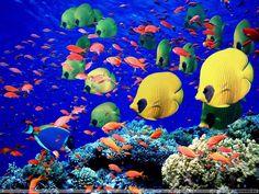 bakgrundsbilder - Färggranna fiskar: http://wallpapic.se/havet-och-havet/farggranna-fiskar/wallpaper-11385