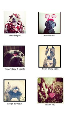 pit bull valentine's day cards! <333
