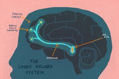 """The Limbic Reward System lights up when curiosity is piqued... Curiosity also showed increased activity in the hippocampus, which is involved in the creation of memories...When the circuit is activated, our brains release a chemical called dopamine which gives us a high... The dopamine also seems to play a role in enhancing the connections between cells that are involved in learning."" By Maanvi Singh"