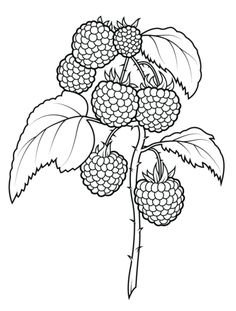 20 Trendy fruit drawing pattern coloring pages Fruit Coloring Pages, Pattern Coloring Pages, Free Printable Coloring Pages, Coloring Book Pages, Coloring Sheets, Fruits Drawing, Outline Drawings, Fruit Art, Hand Embroidery Patterns