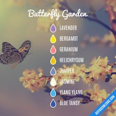 Butterfly Garden - Essential Oil Diffuser Blend- Try barefūt Essential oils today. organically grown, ethically produced and free from chemicals or pesticides. Our oils do not contain fillers, additives, or any other type of dilution. Essential Oil Scents, Essential Oil Diffuser Blends, Blue Tansy Essential Oil, Young Living Oils, Young Living Essential Oils, Aromatherapy Oils, Doterra Essential Oils, Geraniums, Bergamot
