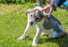 puppy by Gabi Rusu on 500px