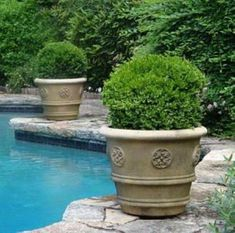 Suitable Plants Grow Beside Swimming Pool 25 Planters Around Pool, Landscaping Around Pool, Backyard Landscaping, Landscaping Ideas, Garden Ideas Around Pool, Backyard Ideas, Backyard Pools, Garden Bulbs, Garden Planters