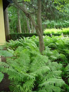 07 stunning front yard landscaping ideas - All For Garden Garden Shrubs, Garden Trees, Shade Garden, Garden Paths, Fruit Garden, Landscaping Supplies, Front Yard Landscaping, Backyard Landscaping, Landscaping Ideas