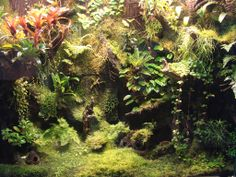 vivarium background/planting