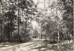 Ellendale State Forest.  Ellendale.  A headless figure has been seen walking along the highway that runs through the park. No one knows who he is, but there is a high rate of accidents reported along this road by the local police.