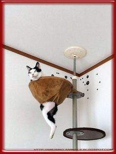 Brazen cats.