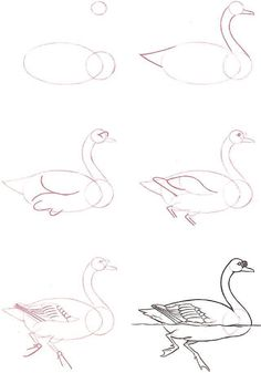 Animal Drawings Learn to draw: Swan - Graphic / Illustration - Art Tutorial - Easy Animal Drawings, Animal Sketches, Bird Drawings, Pencil Art Drawings, Art Drawings Sketches, Easy Drawings, Sketch Drawing, Drawing Animals, Drawing Ideas