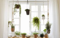 A window garden with hanging planters.