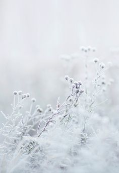 FRAGILE FLOWERS BY RIIKKA KANTINKOSKI ☆