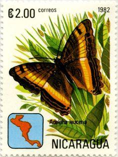 Mariposas de Nicaragua Adelpha leuceria 03/1982 Nicaragua