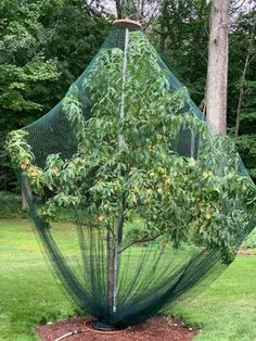 Bird Netting for Gardens - Mesh Netting Tree Tent, Garden Mesh, Vegetable Garden Design, Garden, Deer Resistant Garden, Garden Netting, Garden Supplies, Bird Netting, Hydrangea Shade
