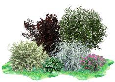 Creative Landscape, Garden Landscape Design, Landscaping Shrubs, Ornamental Grasses, Botanical Gardens, Garden Plants, Backyard, Flowers, Outdoor