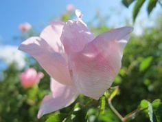 Flores de Bach, una terapia natural: Medicina Natural